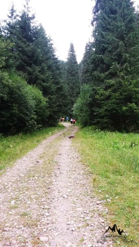 37-drum-forestier-valea-ursului
