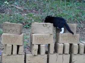caramizi cu pisic
